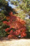 成田山公園の紅葉④
