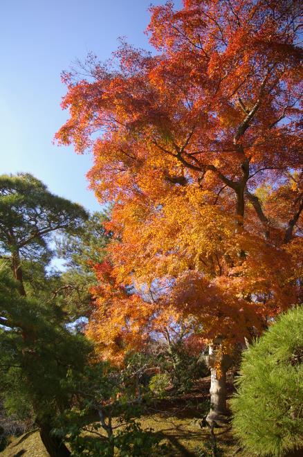 成田山公園の紅葉㉗