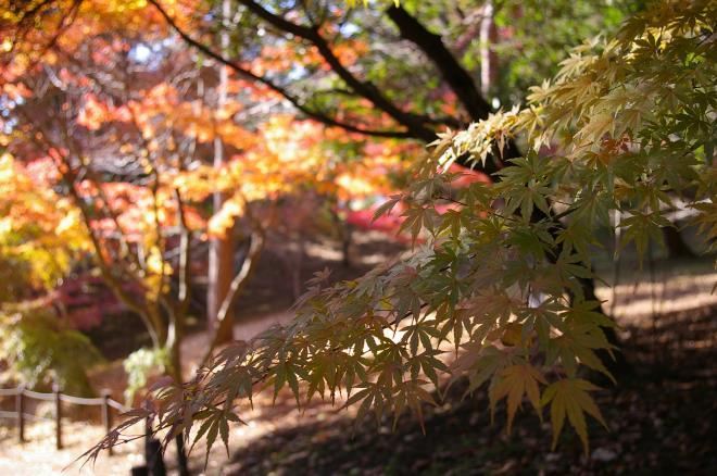 成田山公園の紅葉㉔