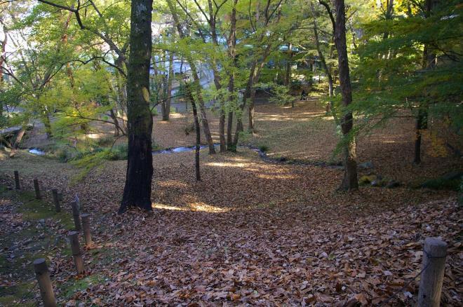 成田山公園の紅葉⑦