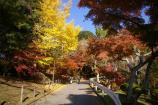 成田山公園の紅葉⑮