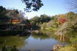 成田山公園の紅葉⑫