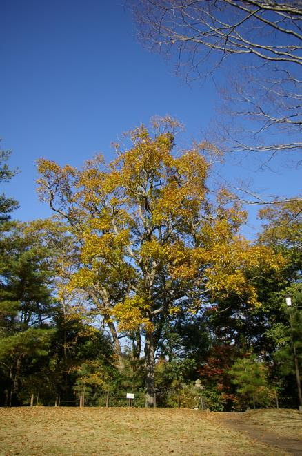 成田山公園の紅葉③