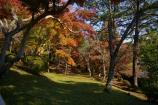 成田山公園の紅葉⑯