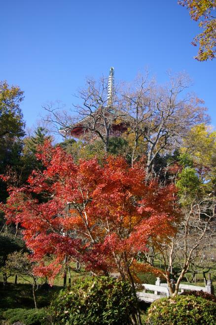 成田山公園の紅葉㉚
