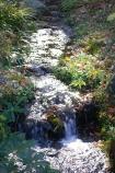 成田山公園の紅葉⑪