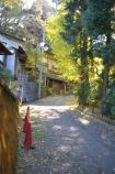 成田山公園の紅葉⑨