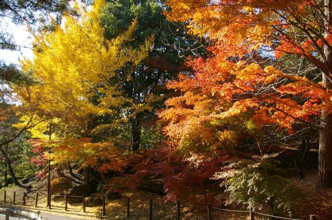 成田山公園の紅葉㉖