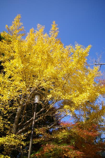 成田山公園の紅葉⑰