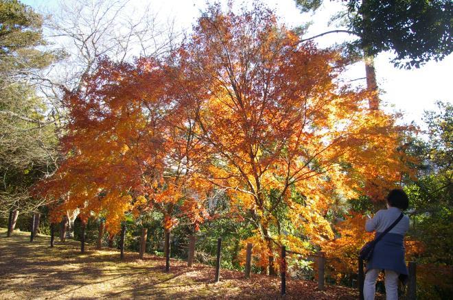 成田山公園の紅葉②