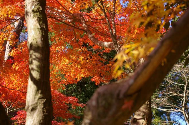 成田山公園の紅葉㉓