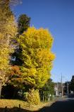 成田山公園の紅葉⑬