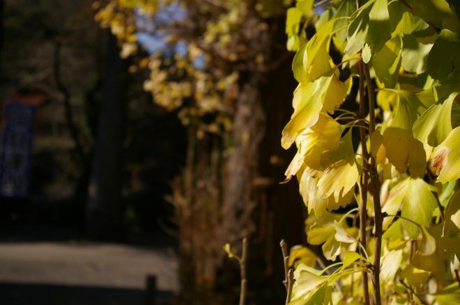 成田山公園の紅葉⑭