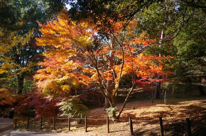 成田山公園の紅葉㉕