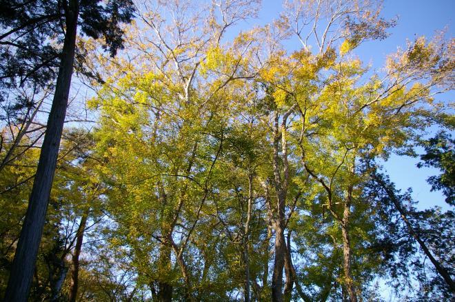 成田山公園の紅葉⑩