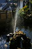 成田山公園の紅葉㉟