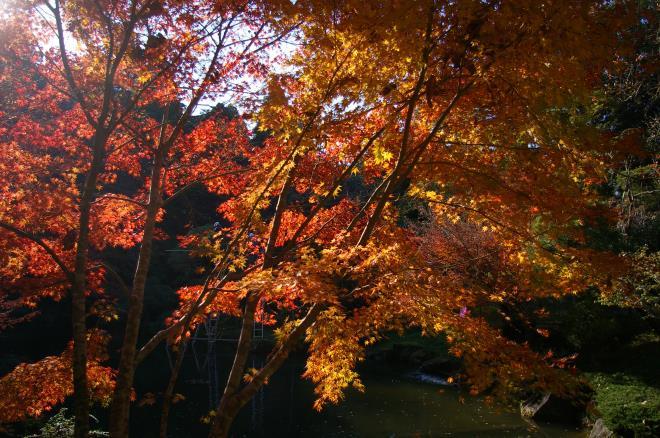 成田山公園の紅葉㉛
