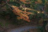 成田山公園の紅葉⑥