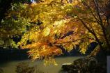 成田山公園の紅葉㉘