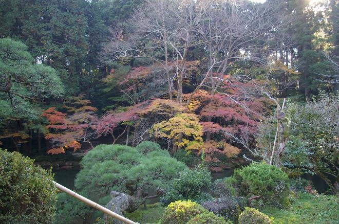 成田山公園の紅葉㉝