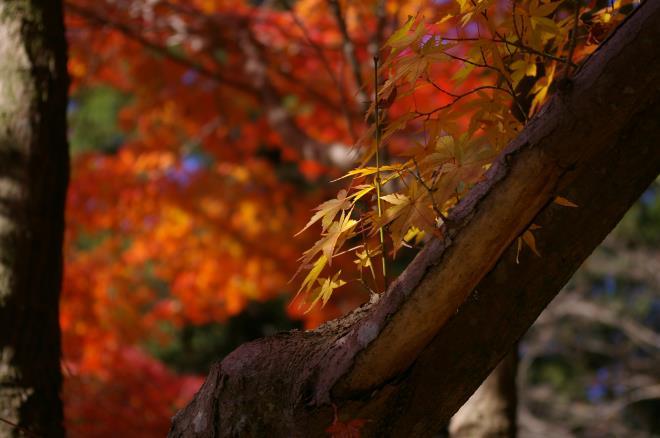 成田山公園の紅葉㉑
