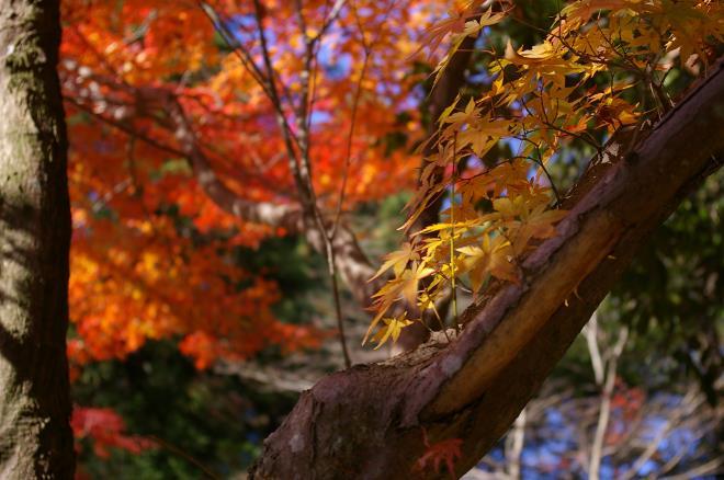 成田山公園の紅葉㉒