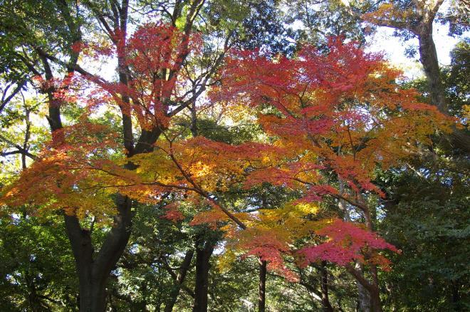 成田山公園の紅葉①