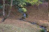 成田山公園の紅葉⑧