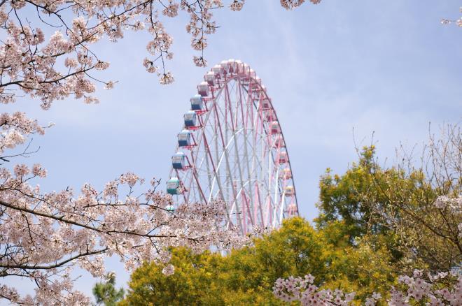 桜と観覧車①
