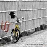 湘南海岸 自転車