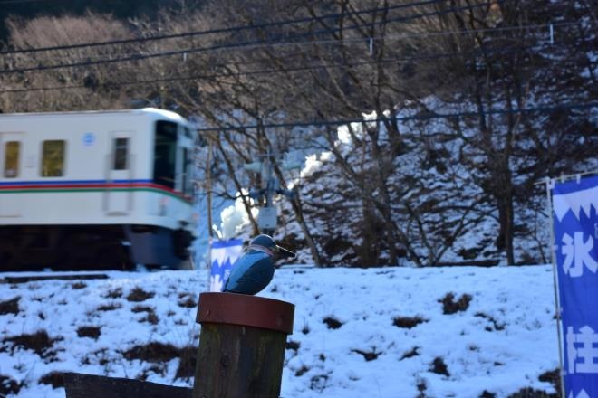 カワセミと電車