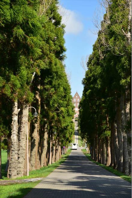 修道院へと続く並木道
