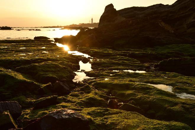 青のりの海岸