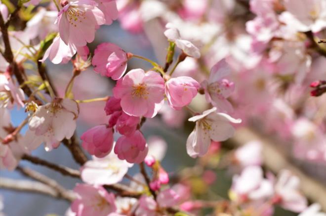花びらのピンクがかわいい