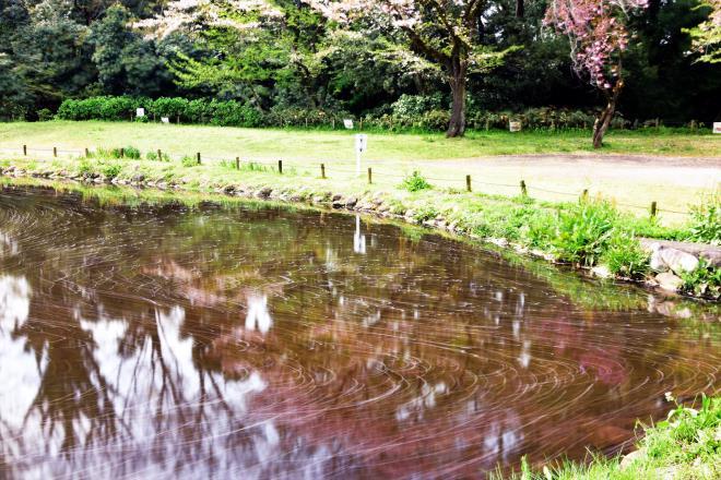 ピンク色の池
