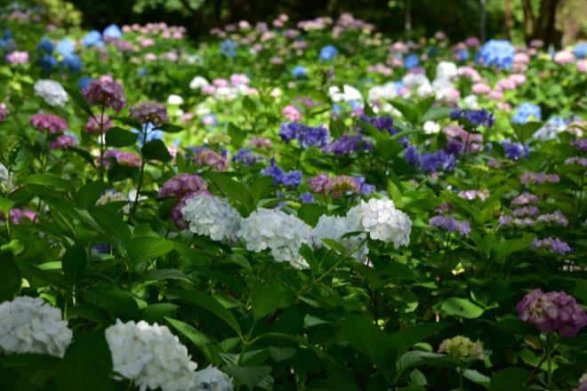 たくさんの種類が咲いてきました
