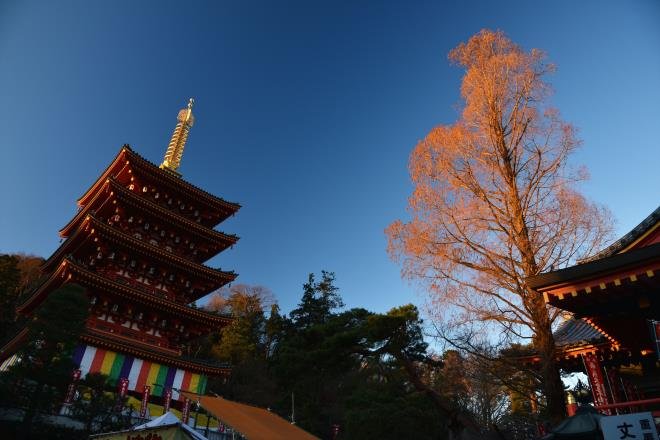 五重塔と木に朝日が