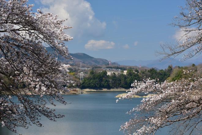 こちらが津久井湖です