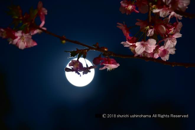 満月の影絵