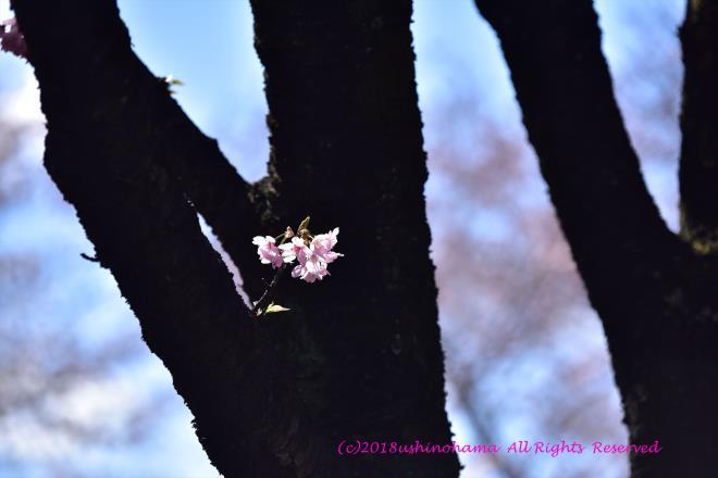 0255 ひそやかに咲く