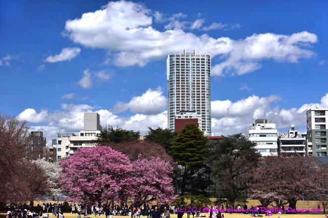 0352 都会の春