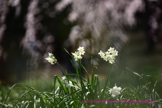 0378 添える花
