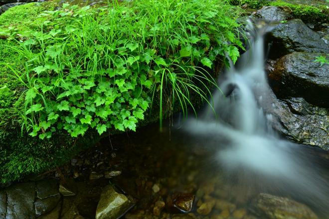小さい水の流れも清く