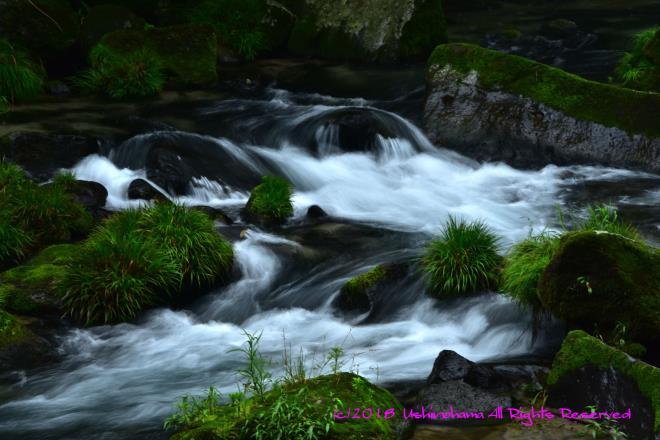 渓谷の流れ_5133