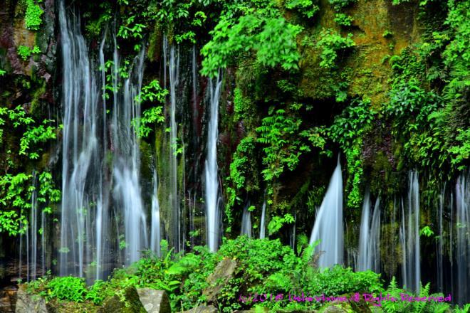 緑の中から湧き出す滝_5062