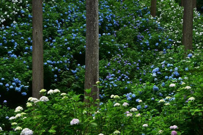 林の中に咲く