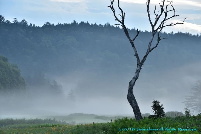 尾瀬ヶ原を霧が覆う @☆SIS_8340R.jpg