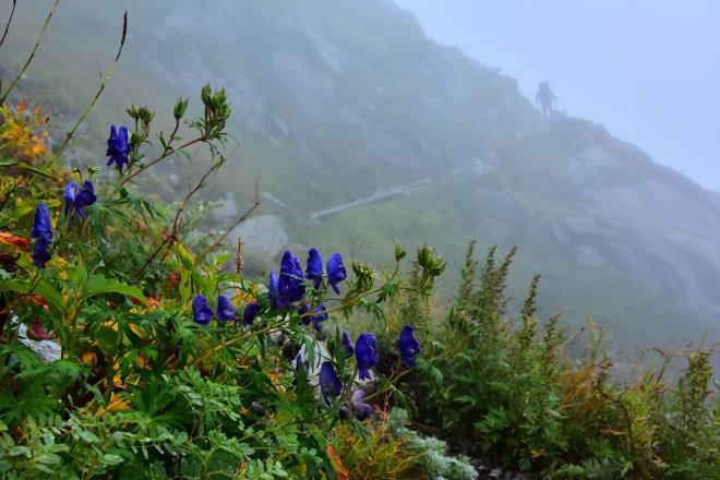 トリカブトの登山道