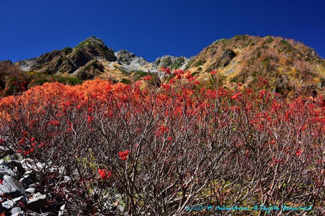 ナナカマドの実と北穂高岳