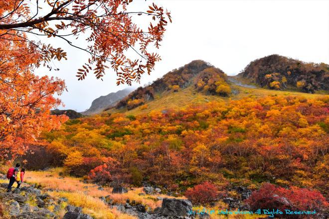 紅葉の山を愛でる